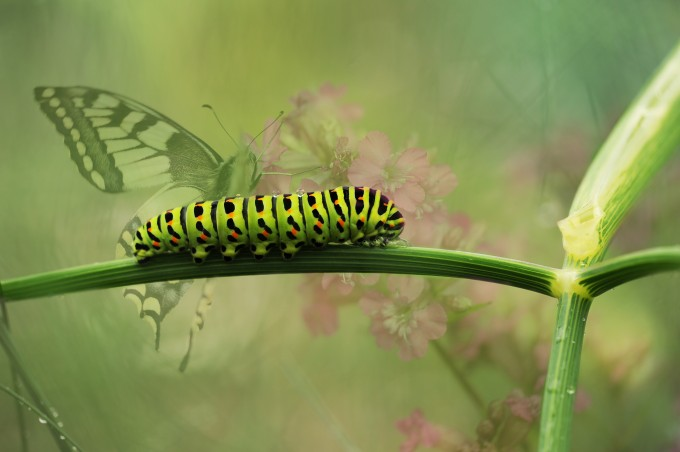 dovetail-butterfly-garden-insect-162311